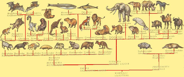 Evolution Der Säugetiere