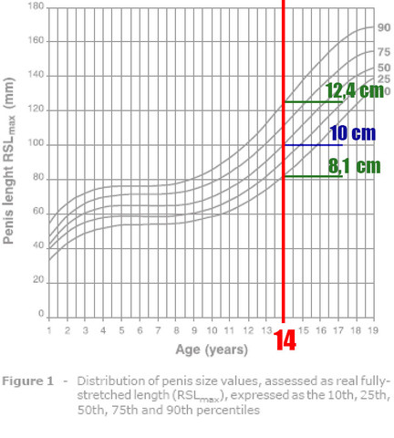 Penisgröße mit 14 Jahren - (Gesundheit, Sex, Medizin)