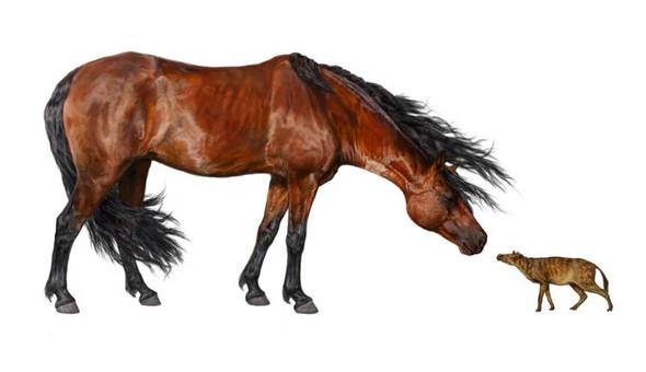 evolution des pferdes