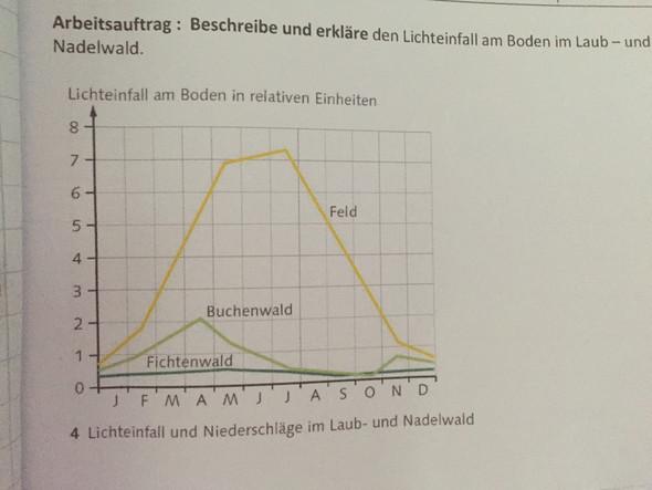 Lichteinfall-Tabelle - (Schule, Biologie, Bio)