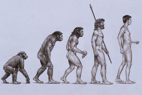 Anthropologie-Homo sapiens - (Geschichte, Stamm, völkerkunde)