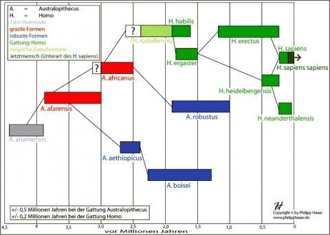 Stammbaum - (Geschichte, Stamm, völkerkunde)