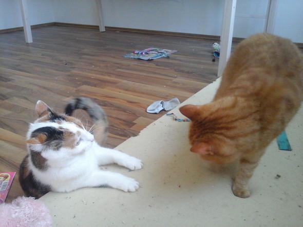 :) - (Tiere, Katze)