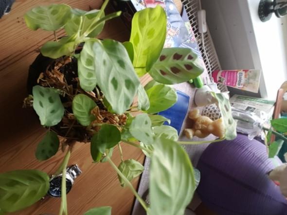 Diese pflanze - (Pflanzen, Floraundfauna)