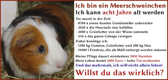 - (Tiere, Hund, Meerschweinchen)