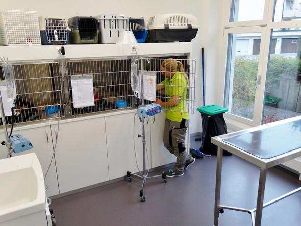 Katzen - (Ausbildung, Tiere, Tierarzt)