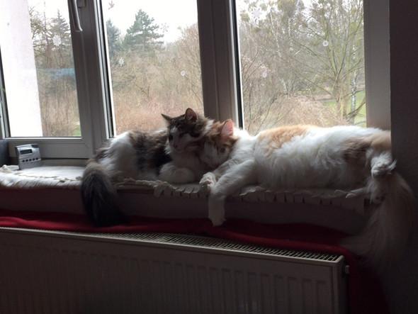 - (Haustiere, Katzen)