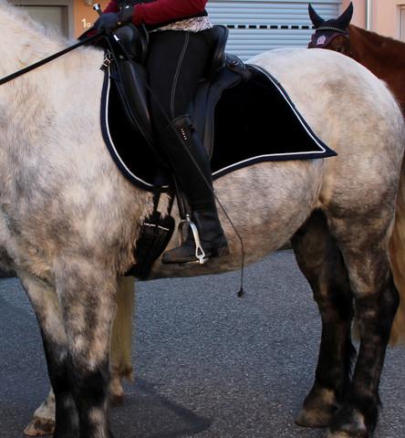 mein Sattel - (Pferde, Sattel)