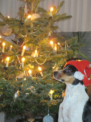 13 kg - (Hund, Haustiere, Hundehaltung)