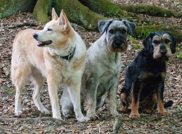 - (Hund, Haustiere, Hundehaltung)
