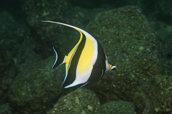 Aquarium welche fische verstehen sich mit skalaren for Aquarium fische arten