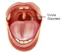 Gaumenzäpfchen - (Medizin, Arzt, Hals)