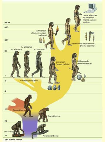 Stammen Wir Vom Affen Ab