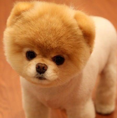 Teddy Bear Puppy Video Hund Welpen