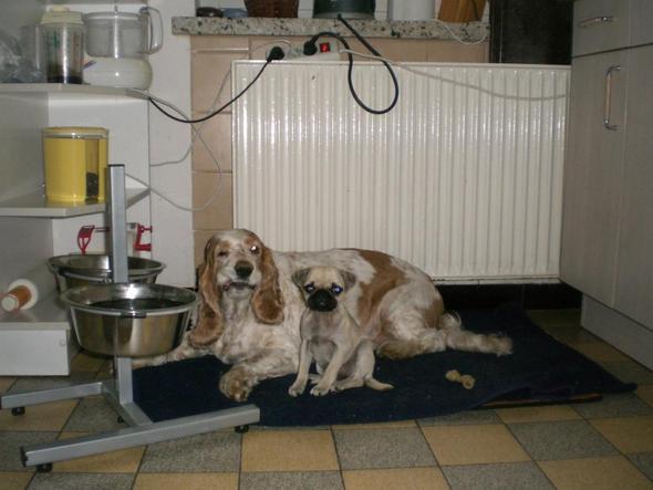 Flocke und Amy - (Hund, Finanzen, Hundesteuer)
