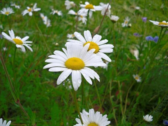 blume vor meinem haus - (Garten, Blumen, Floristik)