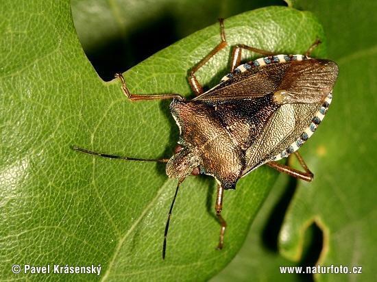 was ist das f r eine k ferart region hessen insekten k fer. Black Bedroom Furniture Sets. Home Design Ideas