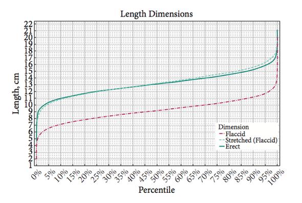 Penisgröße durchschnitt