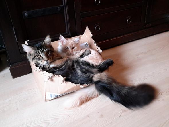 - (Tiere, Tipps, Katze)