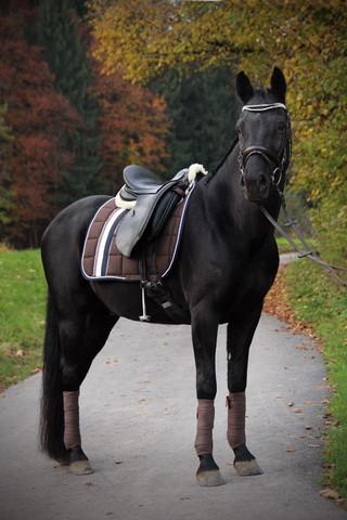Jeffrey mit der Nougat Big Square in DL - (Pferde, reiten, haflinger)