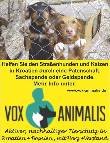 Vox unterstützt das Tierasyl in Zadar - (Hund, Kroatien)