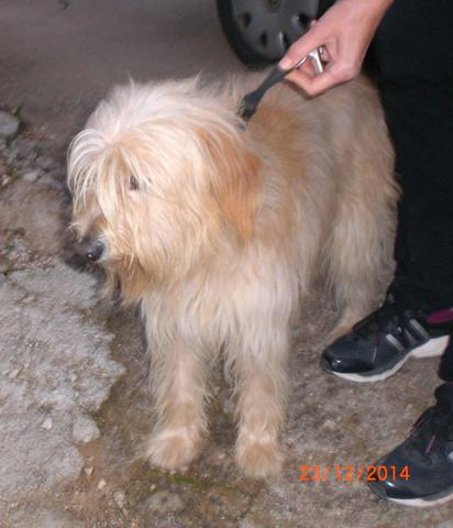 Straßenhund - war mal lieb und mal bissig - (Hund, Kroatien)