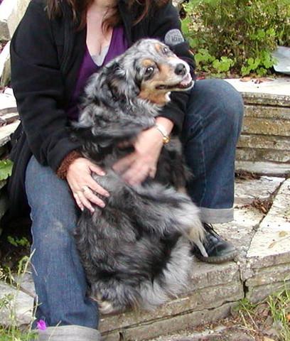 """Mein """"Schneckle"""" - Dschinny 2009 - (Hund, Trauer)"""