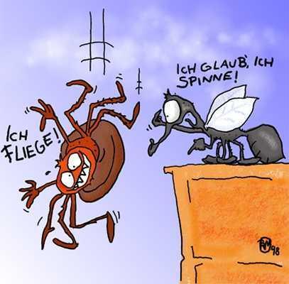 eiki.li - (Spinnen, spinnennest)