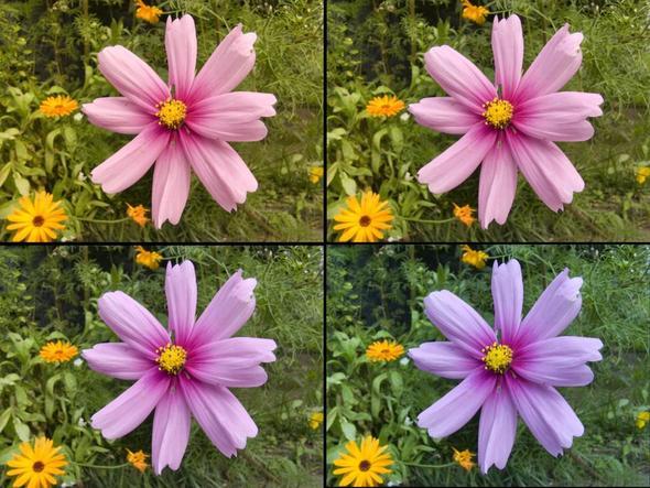 Aufnahme im Raw-Format mit verschiedenen Presets in Photoshop importiert... - (Farbe, Fotografie, Panasonic)