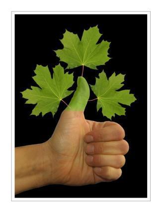 Grüner Daumen hoch und los geht`s! - (Pflanzen, Pflege, Blumen)