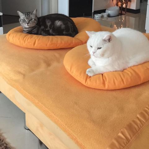 Romeo & Julia  - (Tiere, Haustiere, Katzen)