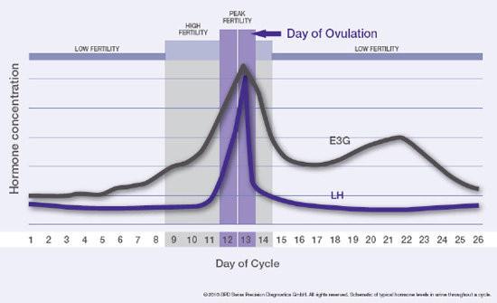 Eisprung und fruchtbaren Tage - (Sex, schwanger)