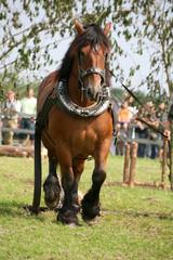 - (Job, Pferde, Pferdebesitzer)