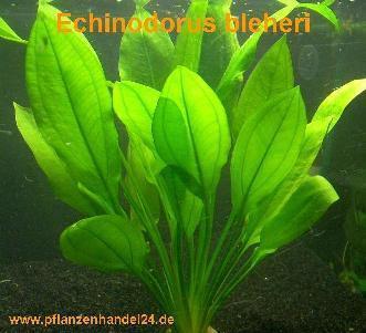Wieviele wasserpflanzen sind n tig bei einem 500 liter for Goldfische teich winter