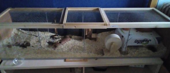 mein Käfig - (Tiere, Maus, Hamster)