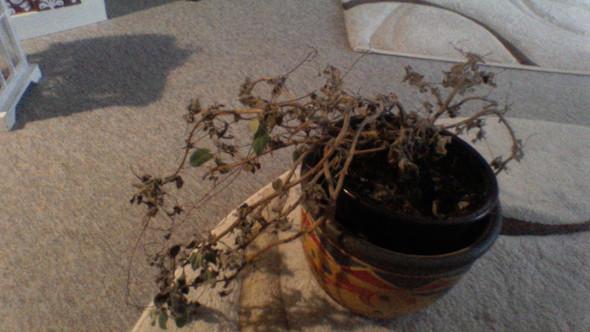 traurig - (Pflanzen, suche )