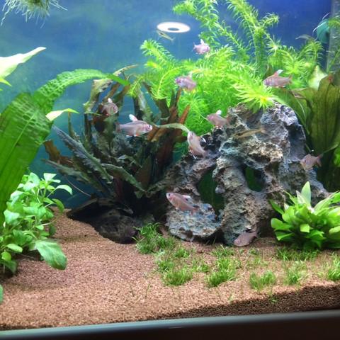 - (Pflanzen, Fische, Aquarium)