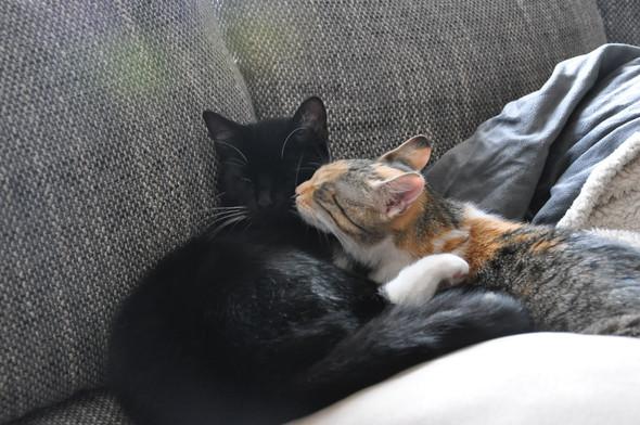 Susi und Strolch - (Katze, giftig, Spinat)