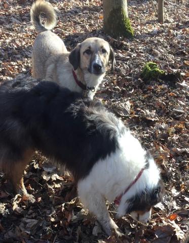 Murmel und Baily 1 - (Hund, Erziehung, Jagdtrieb)