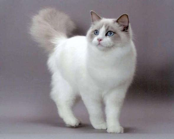 - (Katze, Haustiere)