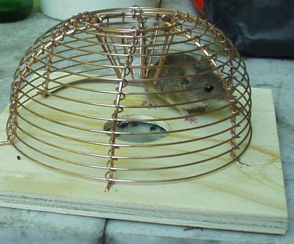 Maus im Haus fangen ohne Falle ohne falle fangen