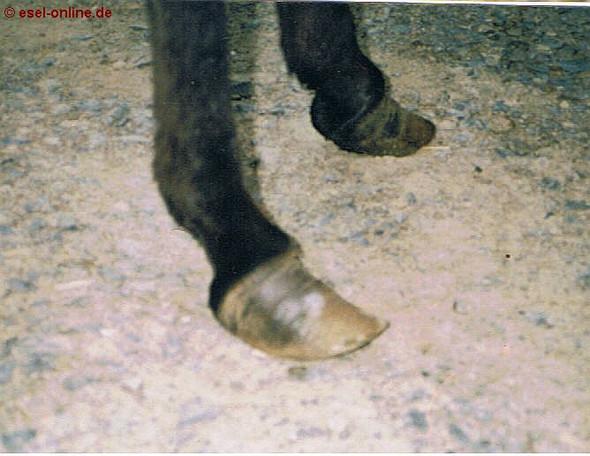 - (Pferde, reiten, Tierschutz)