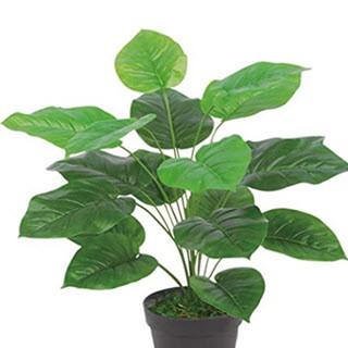 - (Pflanzen, Erde, Schimmel)
