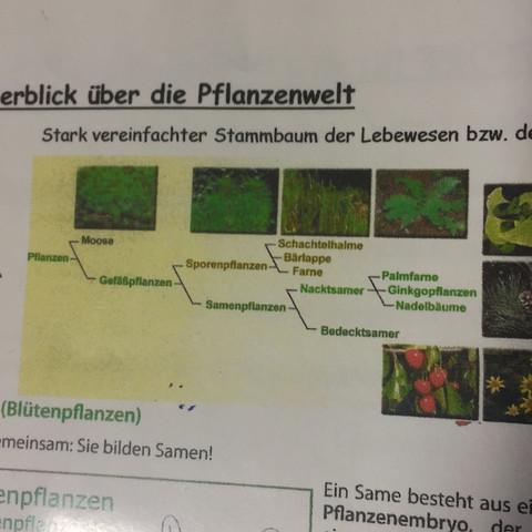 Hier das Bild mit den primitiven Formen der Pflanzen. - (Biologie, ökologie, Farn)