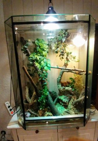 cham leon angefressen tiere tierarzt terrarium. Black Bedroom Furniture Sets. Home Design Ideas