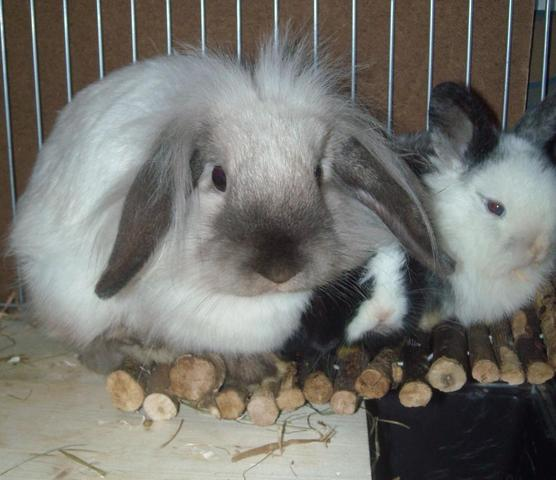 Fluse+Babys - (Tiere, Kaninchen, Hamster)