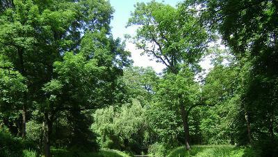 Wald... - (Geografie, Lösung, Klimawandel)