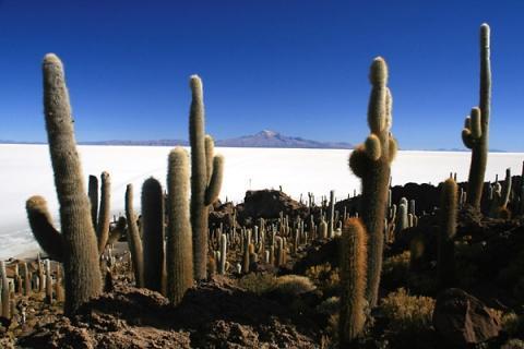 Salar de Uyuni in Bolivien - (Reise, Südamerika, rucksackreise)