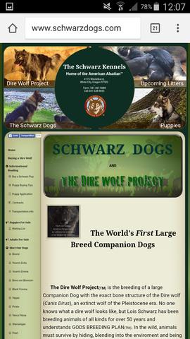 Die American Alsatian - (Tiere, Haustiere, Wölfe)