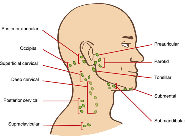 Geschwollene Lymphknoten Hinterkopf